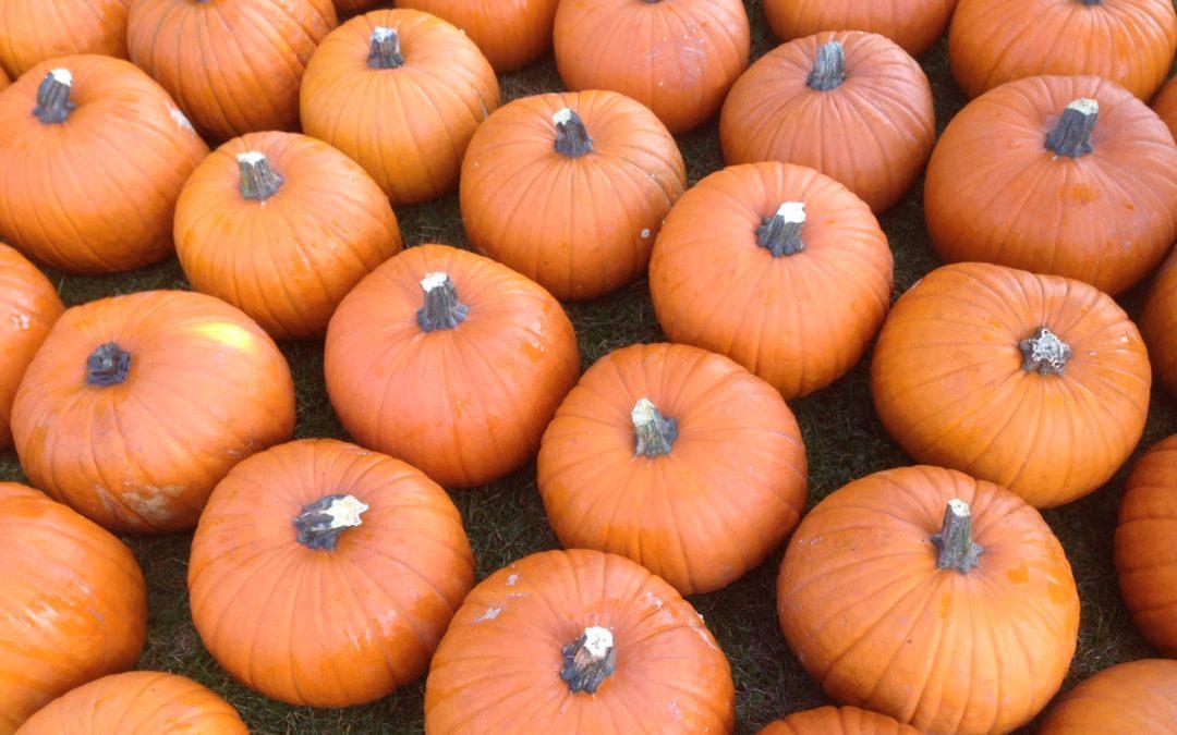Podzim a dýňové šílenství také u nás :-)